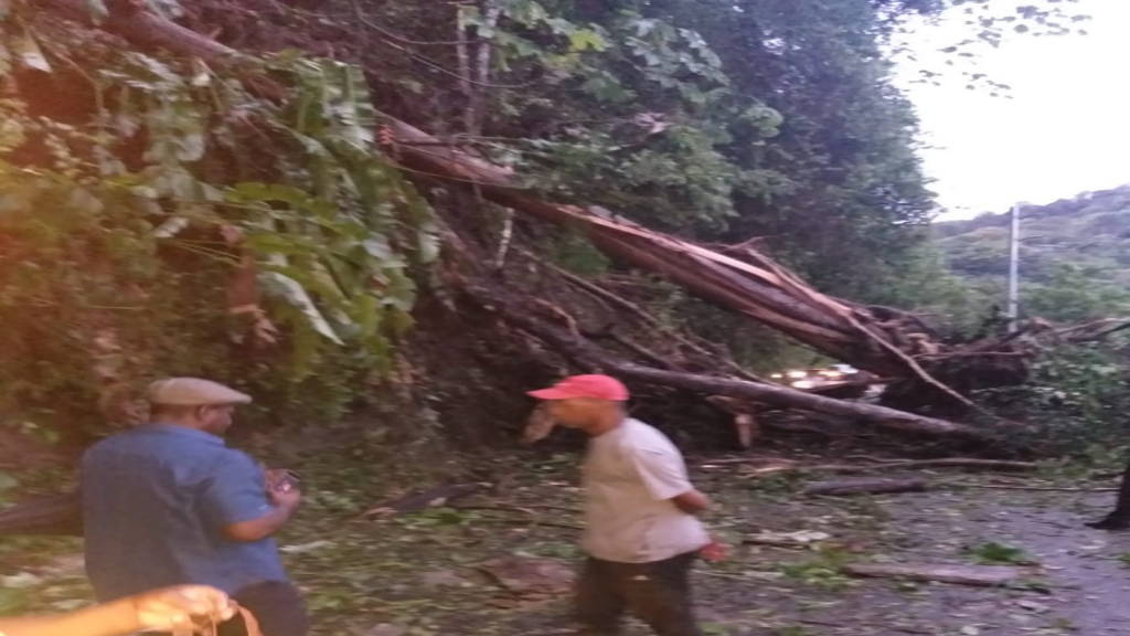 Flashback: Fallen trees block access to the North Coast Road, Maracas following overnight heavy rains on July 4, 2019.