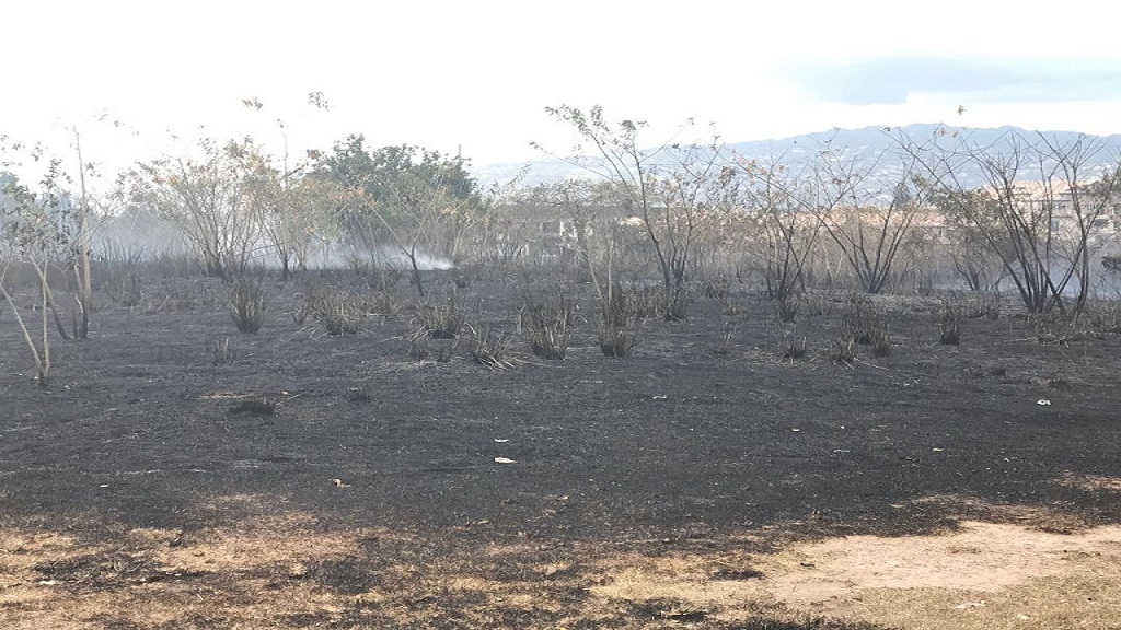 A section of the residue of a fire which destroyed acres of bush land on the Kings House property in St Andrew earlier this year.