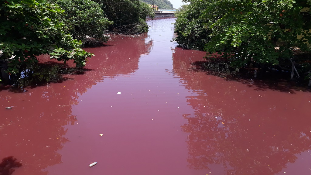The waters of the Outram River which flow into the sea through Port Maria in St Mary, have suddenly become almost blood red.
