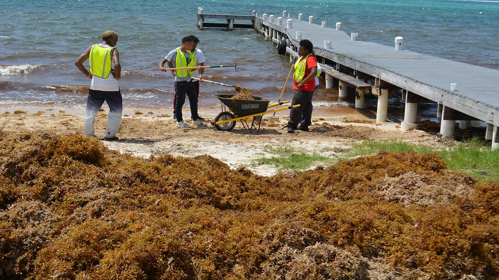 NiCE workers extended to continue sargassum clearance | Loop News