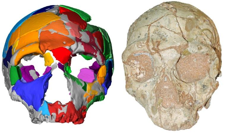 Cette image tranmise le 10 juillet 2019 par l'Université Eberhard Karls de Tuebingen montre une reconstruction et un modèle numérique d'un crâne nummé Apidima 2, découvert dans une grotte grecque