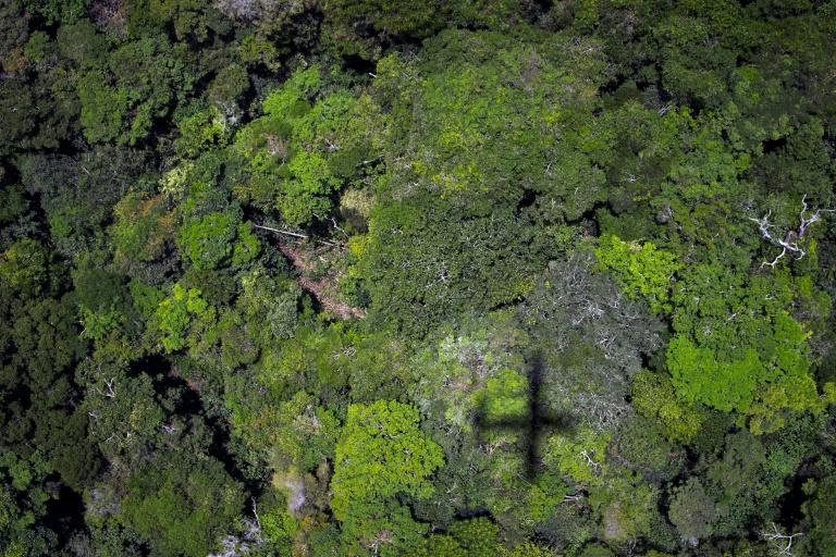 L'Amazonie, au Brésil, le 14 octobre 2014