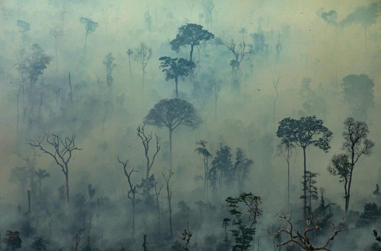 Photo aérienne diffusée par Greenpeace montrant des feux de forêt au Brésil dans l'Etat de Para, le 23 août 2019