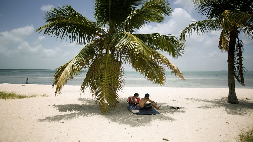 In this July 1, 2015 file photo, Marvin Hernandez, right, and Kelly Vera sit in the shade of a palm tree, in Key Biscayne, Fla. Florida's iconic palm trees are under attack from a fatal disease that turns them to dried crisps in months, with no chance for recovery once they become ill. Spread by a rice-sized, plant-hopping insect, lethal bronzing has gone from a small infestation on Florida's Gulf Coast to a nearly statewide problem in just over a decade. (AP Photo/J Pat Carter, File)