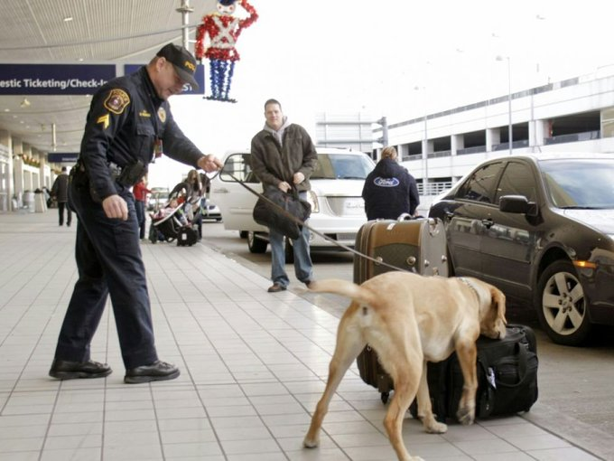 Un chien renifleur à l'aéroport de Detroit, le 26 décembre 2009