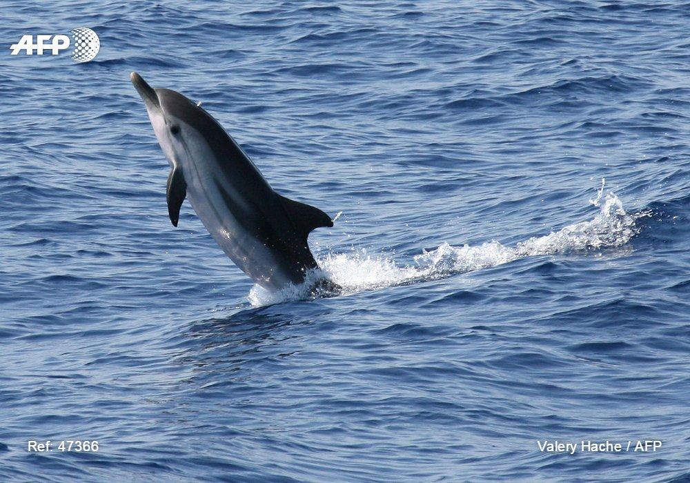 Le ministre de l'Environnement appelle à la protection des dauphins échoués sur la Côte-des-Arcadins et sur les autres plages côtières du pays./Photo: Valérie Hache-AFP.