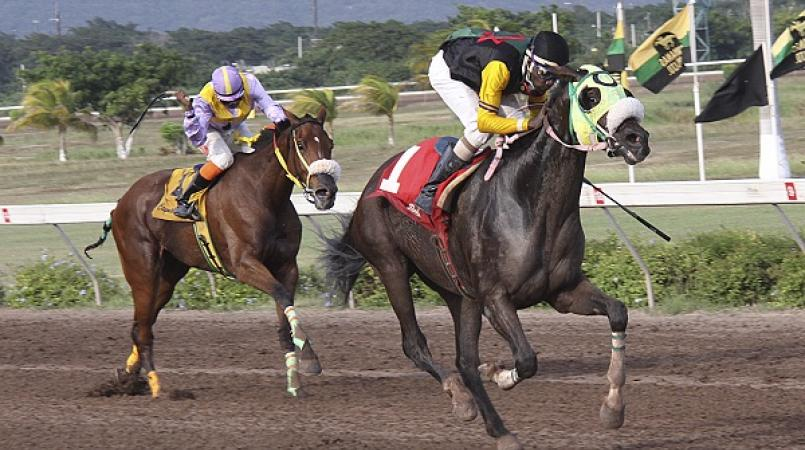 File photo of horses racing at Caymanas Park