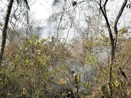 Un pompier volontaire combat un feu de forêt à proximité de Roboré, dans l'est de la Bolivie, le 24 août 2019 afp.com - AIZAR RALDES