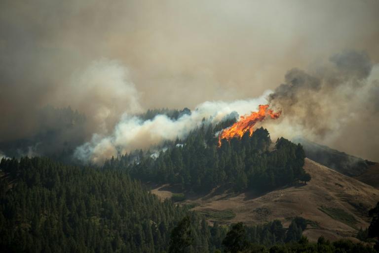 Les flammes ravagent une forêt sur l'ile espagnole de Grande Canarie, le 18 août 2019.