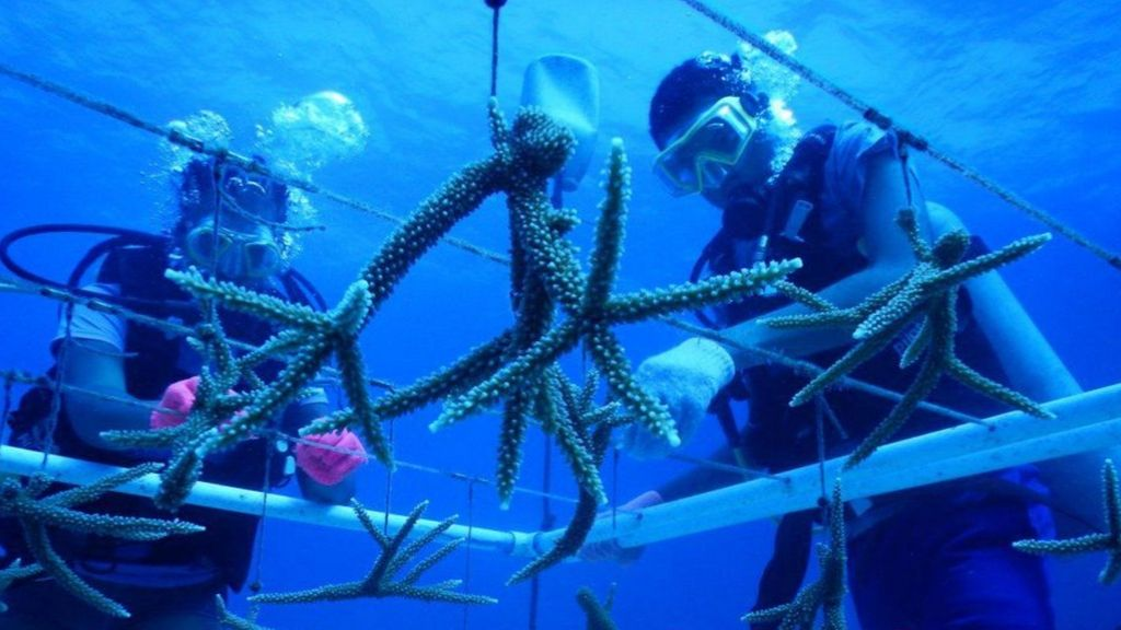 Marine Scientists from CCMI doing coral gardening.