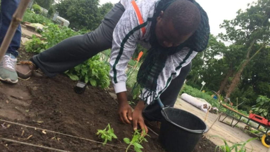 WHYFARM Executive Director Alpha Sennon plants seedlings at the City School Yard Garden in Amsterdam. Photo courtesy Alpha Sennon.