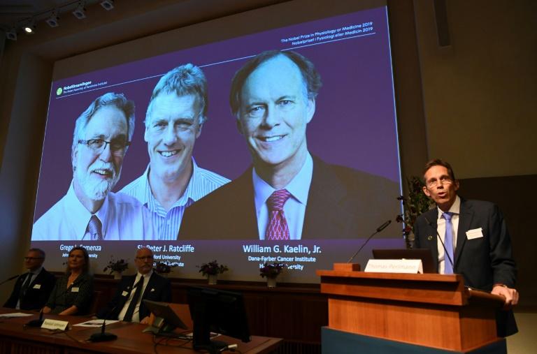 Les photos des vainqueurs du prix Nobel de médecine, les Américains William Kaelin et Gregg Semenza et le Britannique Peter Ratcliffe, le 7 octobre 2019 à l'Institut Karolinska de Stockholm, en Suède