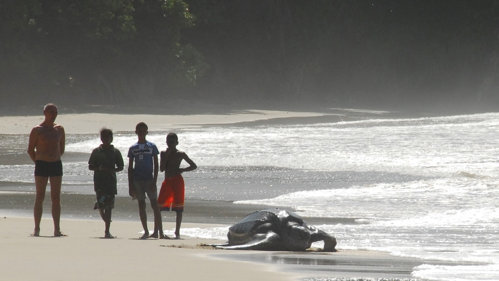 On a beach in Trinidad, beachgoers experience one of nature's wonders as they observe a leatherback turtle making its way back to the ocean. Photo courtesy Coastal Dynamics Limited.