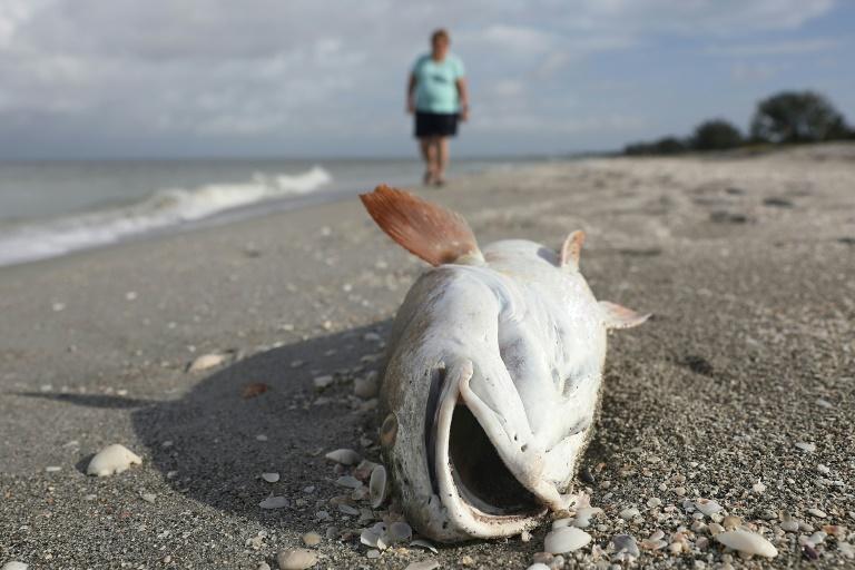 Poisson, Photo d'illustration Crédit : AFP