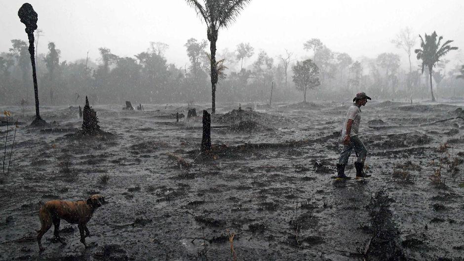 Amazonie: Plus de 10 000 km2 déboisés en un an