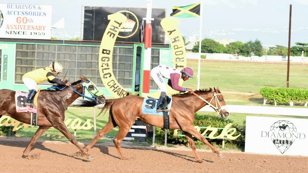 Lady Blue, with jockey Omar Walker, wins the round-five BG&LC Chairman's Trophy ahead of Pleasant Secret, with Ameth Robles, at Caymanas Park on Saturday, November 9. The Wayne DaCosta-trained filly returns to the track today  in the seventh race. (PHOTO: Marlon Reid).