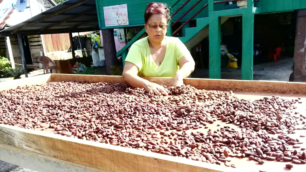 Photo courtesy the Cocoa Development Company of Trinidad and Tobago Limited.