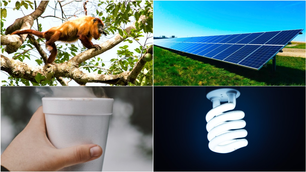 Photo credits L-R, clockwise: Guyananan Red howler courtesy Wikipedia; Solar panels photo by Chelsea on Unsplash; LED bulb photo by Zain Ali on Pexels; Styrofoam photo by Caleb Lucas on Unsplash.