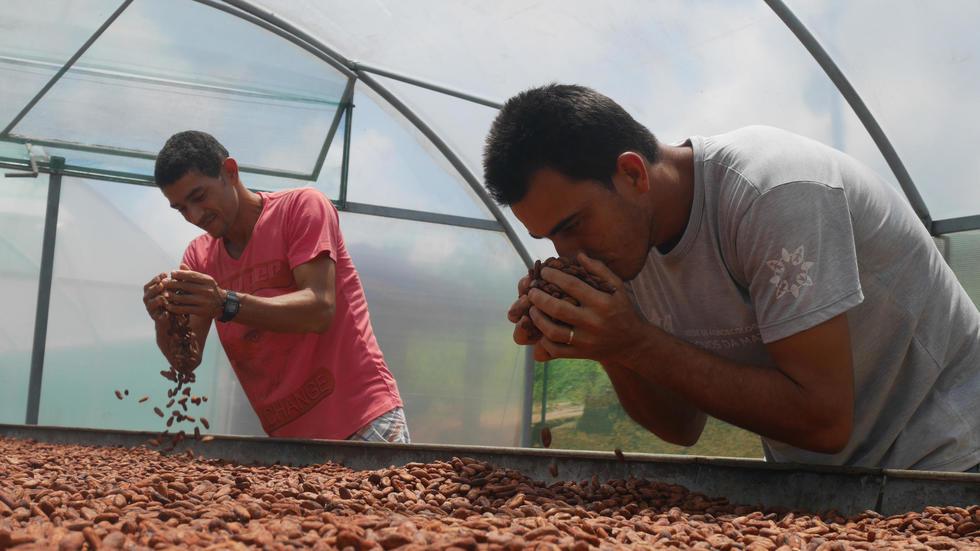 Brésil: le cacao bio commence à sortir des petits paysans de la misère. Photo: AFP