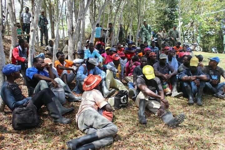 Des ressortissants haïtiens suspectés de se livrer à la coupe illégale d'arbres en République Dominicaine./Photo:Noticia Libre.
