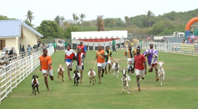 Goat racing in Buccoo, Tobago, Trinidad and Tobago.  Photo source: Discover TT
