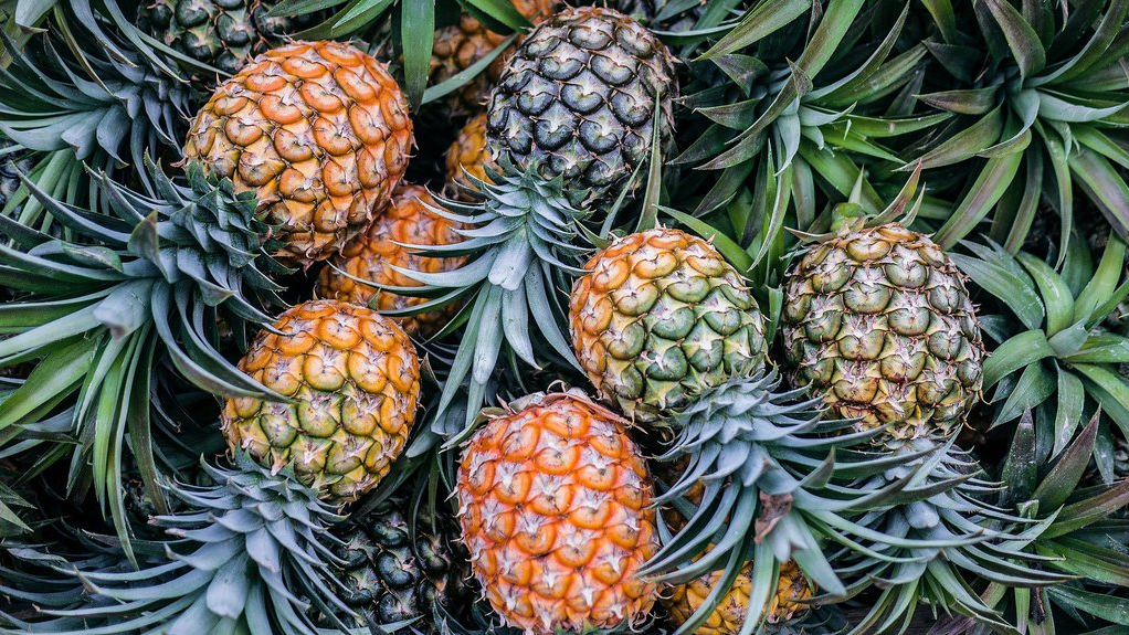 Pineapples (Internet image)