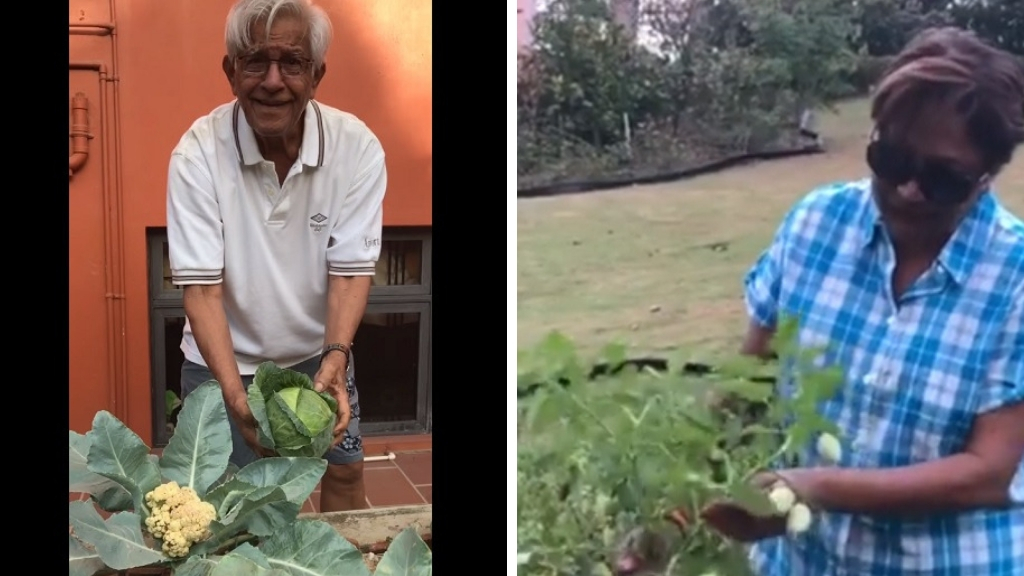 Photo: Former prime minister Basdeo Panday showed off his cabbage and cauliflower to daughter Mickela Panday who shared a video via Facebook. Opposition Leader Kamla Persad-Bissessar also shared a video of her home garden via Facebook.