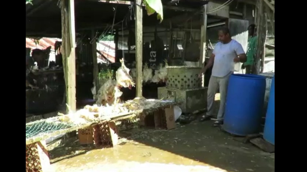 Port Antonio-based poultry farmer, Colin Bell, has found himself with some 10,000 pounds of chicken but no buyers.