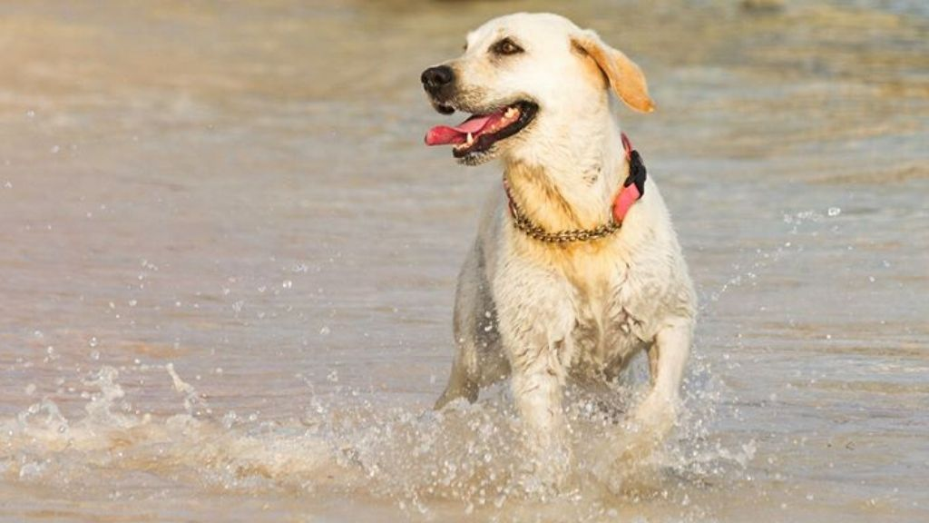 Photographer Helen Jones took this amazing shot of a Cayman canine having some fun on Spotts beach