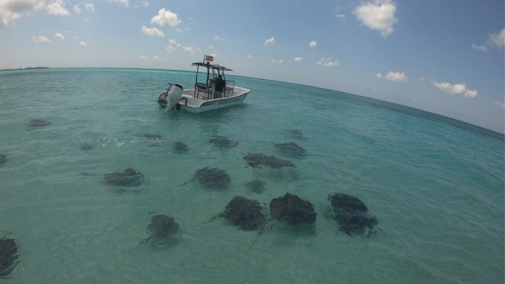 Image source: The Cayman Islands Department of the Environment (DoE)
