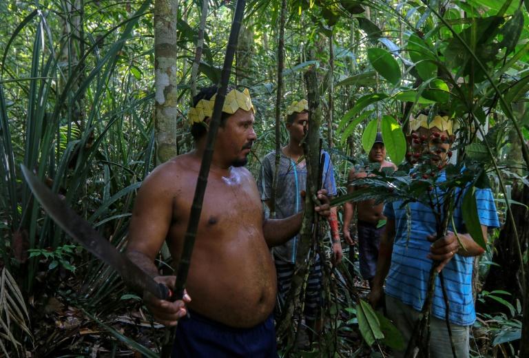 Des indigènes de l'ethnie Sateré Mawé cueillent des herbes médicinales dans la forêt amazonienne, près de Manaus pour soigner les malades du Covid-19, le 17 mai 2020