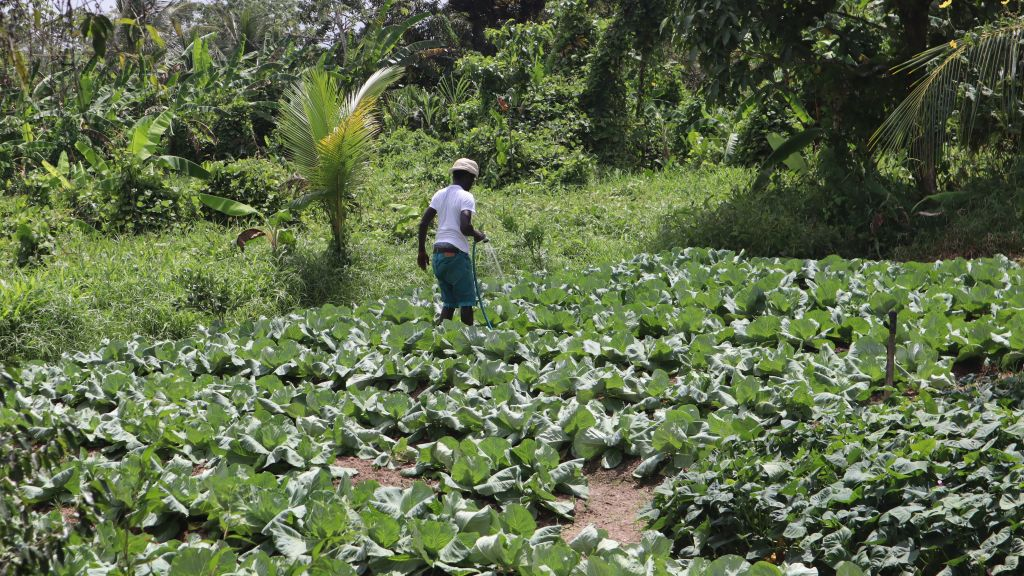 Home garden project launched in Guyana. Photo: Ministry of Agriculture, Guyana.