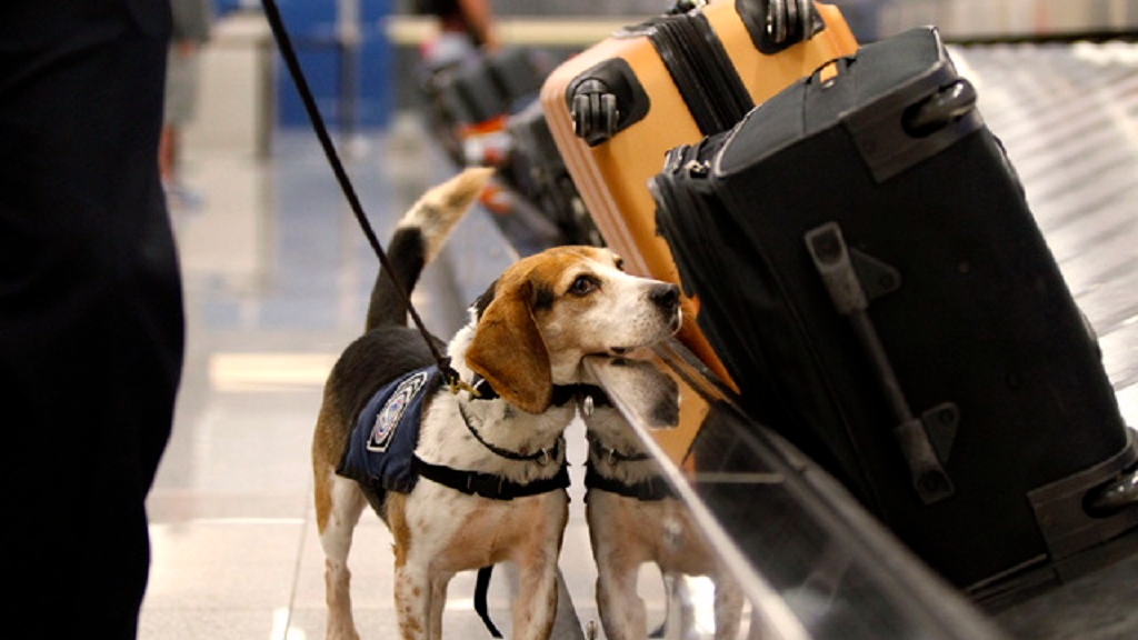 File photo: Canine team at work during a recent operation