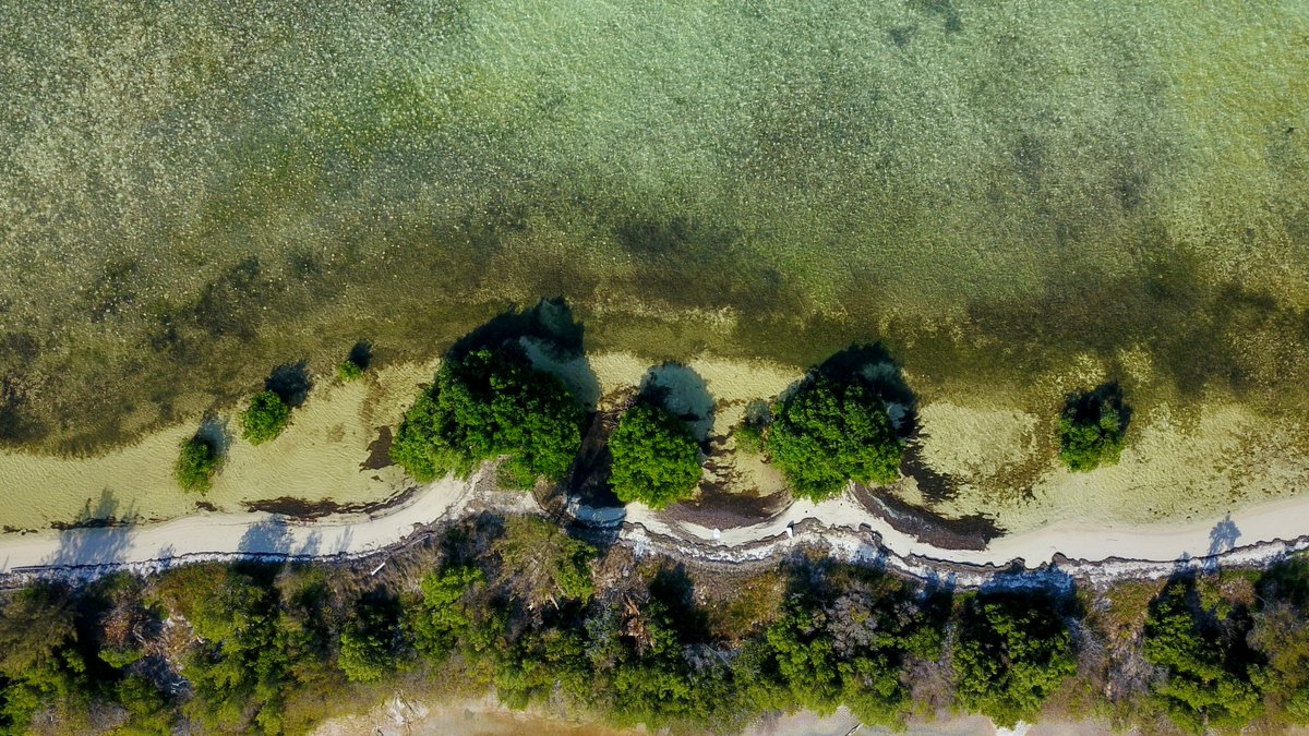 The coastal protection abilities of mangroves are particularly clear on our beach coastlines such as around Barker's (photo) with the beach literally rooted to the mangroves.