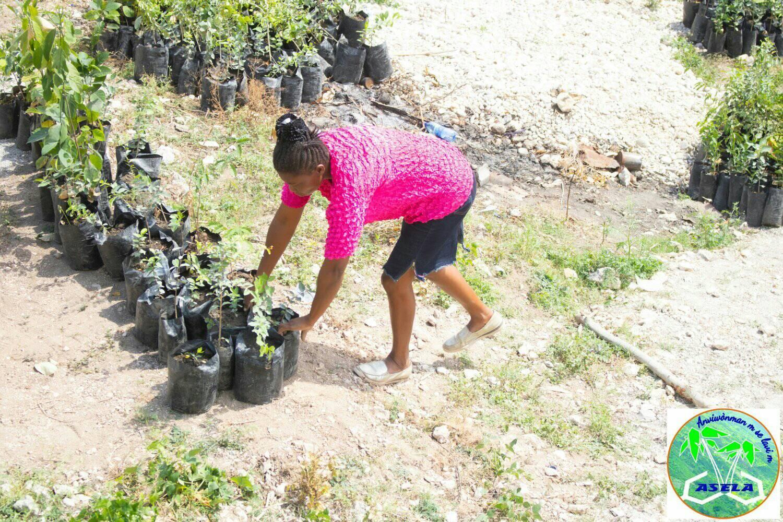 Des plantules distribuées à des organisations de base à Camp-Perrin et Maniche (département du Sud). Photo: Jeanel Constant