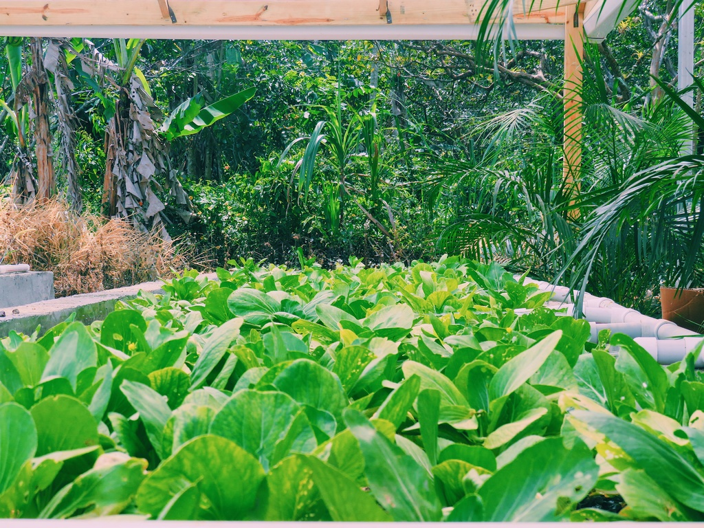 Contributed photo shows an aquaponics pond with crops.