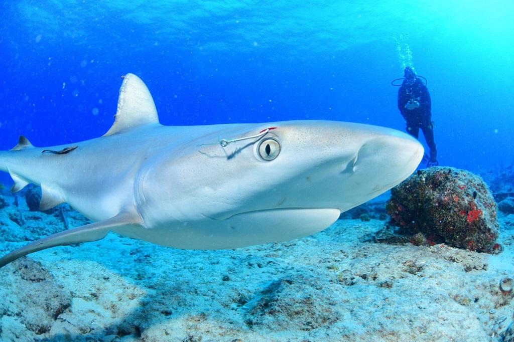 [Photo credit:Ocean Explorers Dive Center]