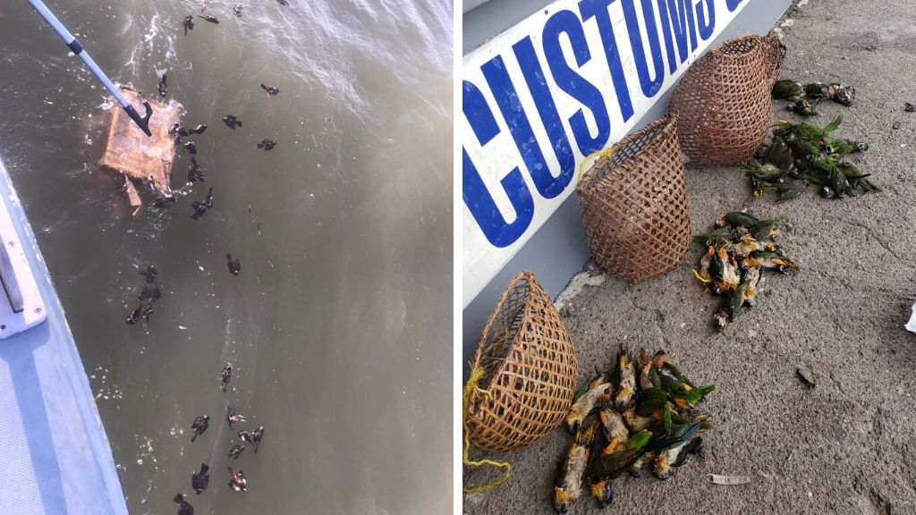 3 held by Coast Guard officers after birds drowned at sea