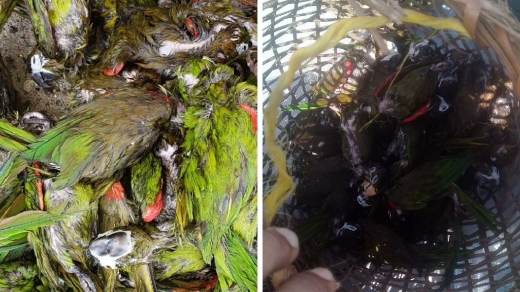 47 parrots were killed after theyr were thrown overboard by smugglers. Three people were expected to be charged for the crime.
