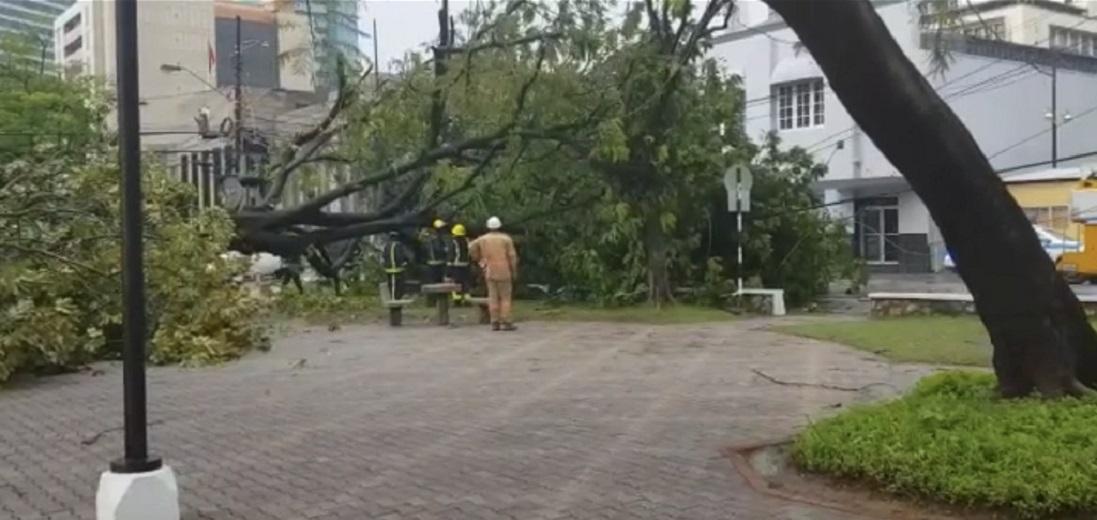 Photo of fallen tree at the Brian Lara Promenade on July 29, 2020.