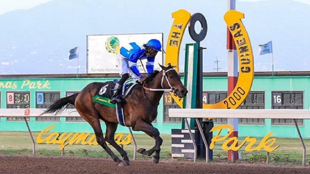 WOW WOW (Robert Halledeen) wins the 2000 Guineas at Caymanas Park by three lengths on Sunday, July 26, 2020. (PHOTO: caymanasracing.com).