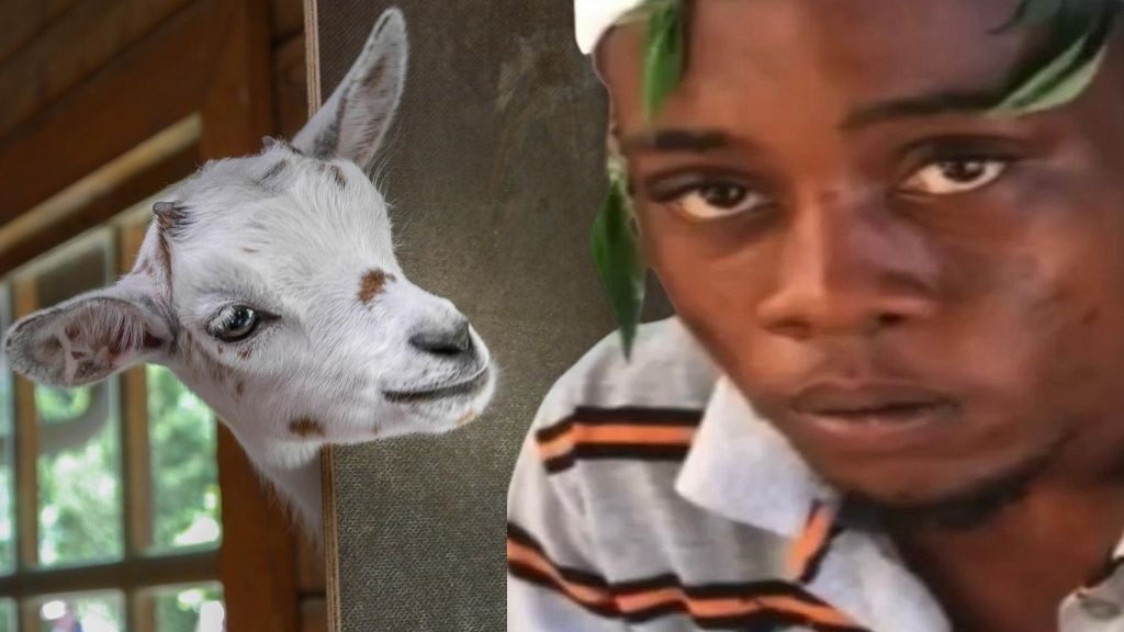 'Ghetto Goat'