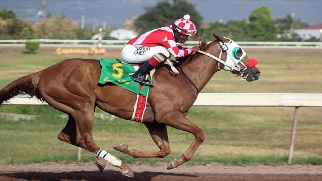 ABOVE AND BEYOND, is the hot favourite for Saturday's 10-furlong Jamaica Oaks at Caymanas Park. (PHOTO: caymanasracing).