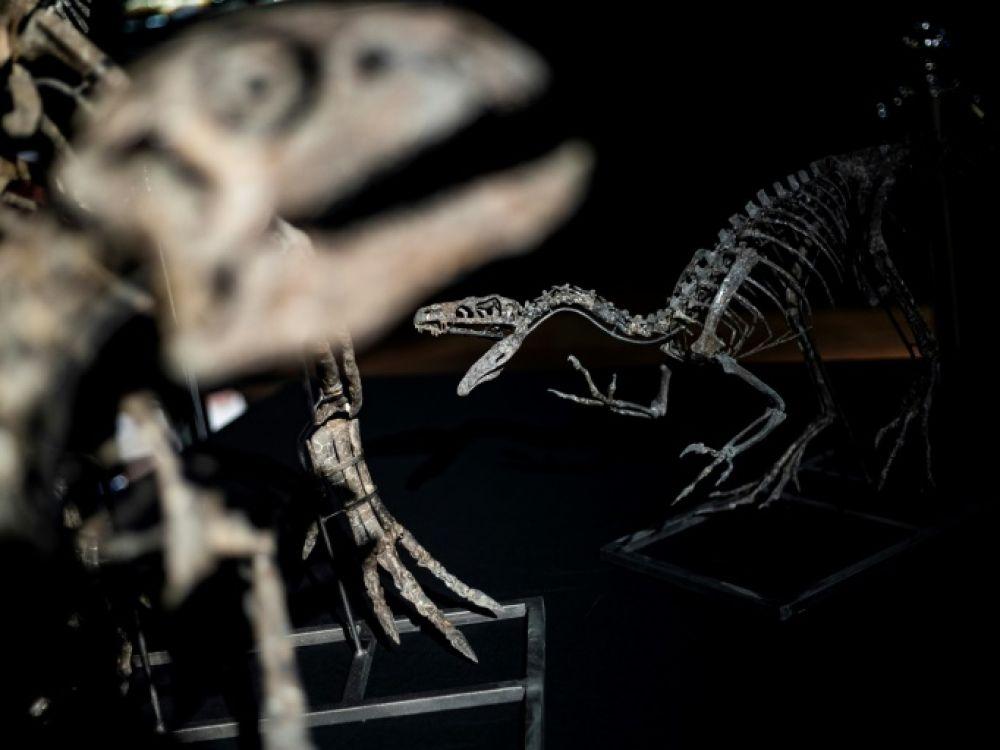 Des chercheurs canadiens ont découvert le premier cas de cancer connu chez un dinosaure, selon une étude publiée dans le numéro du mois d'août de la revue scientifique The Lancet Oncology KENZO TRIBOUILLARD AFP/Archives