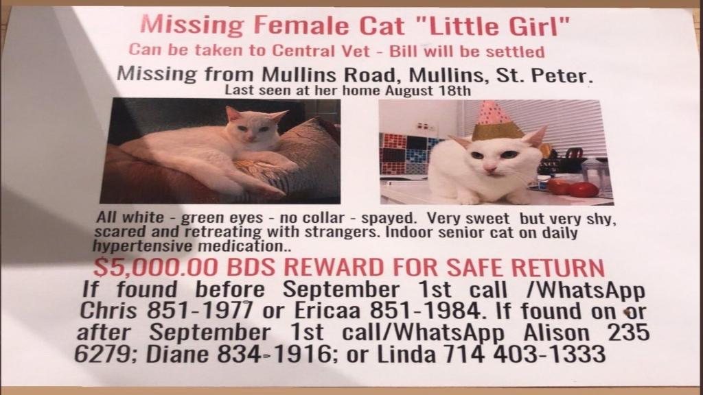The flyer circulating social media for 'Little Girl'.
