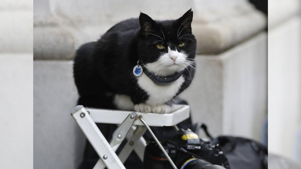 Palmerston, the Foreign Office cat (now retired) sits on a photographer's ladder at Downing Street in London. (AP Photo/Kirsty Wigglesworth)