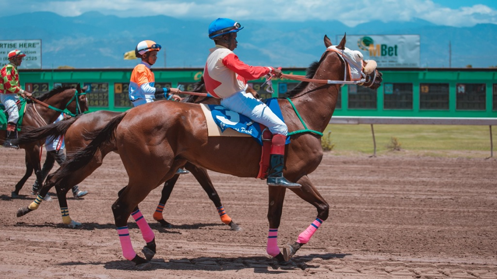 Horses take the track for a  race meet at Caymanas Park earlier this year.
