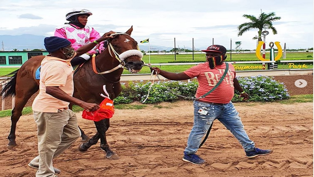 DRUMMER BOY, with female apprentice Abigail Able,  is being led to the winners' enclosure after capturing the GA 'Sarge' Bucknor Memorial Cup at Caymanas Park on Saturday, September 5, 2020. DRUMMER BOY won at good odds of 13-1. (PHOTO: caymanasracing).