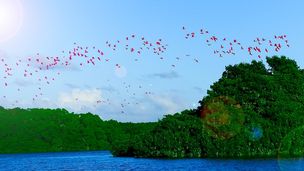 A flock of Scarlet Ibis. Photo: Sai Saidu.