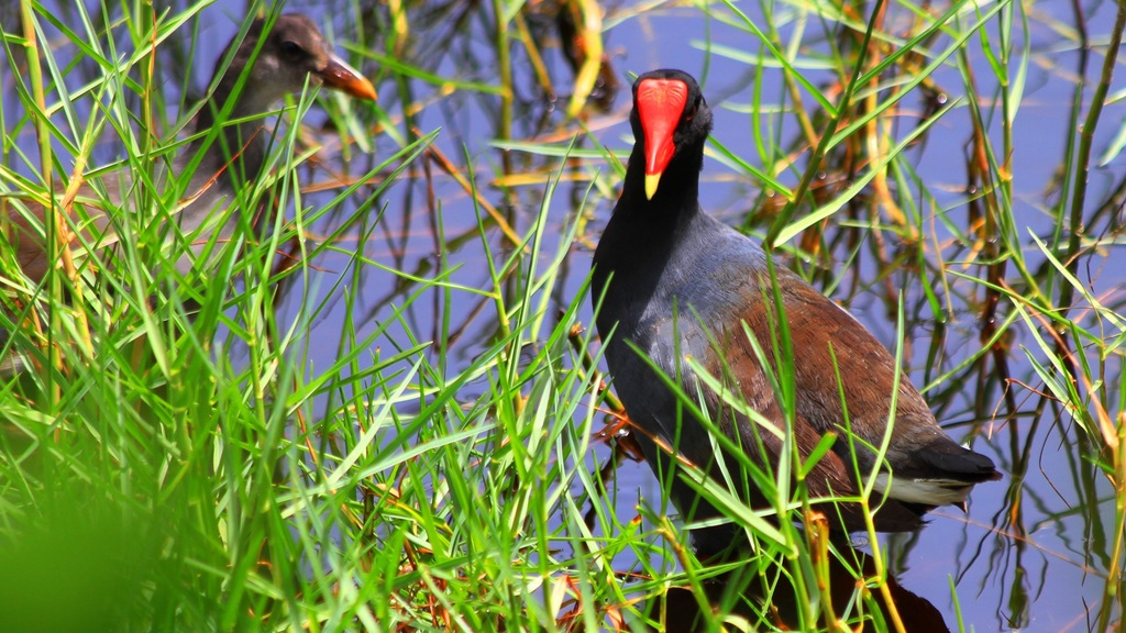 The T&T I See: The beauty of our wetland wildlife | Loop News